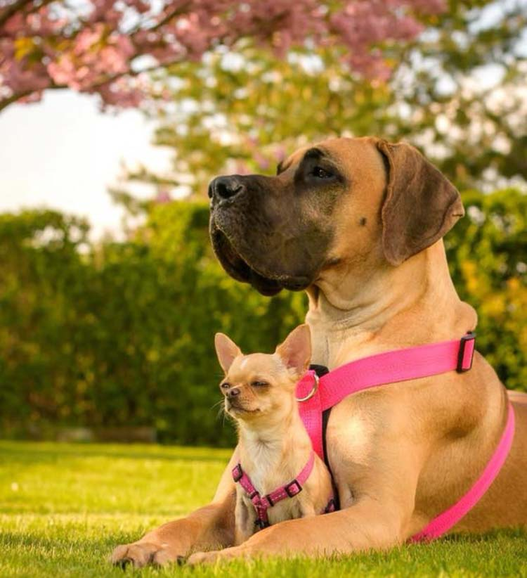 Duży pies może takiego malucha nawet zabić jednym kłapnięciem pyska czy uszkodzić pacnięciem łapy.