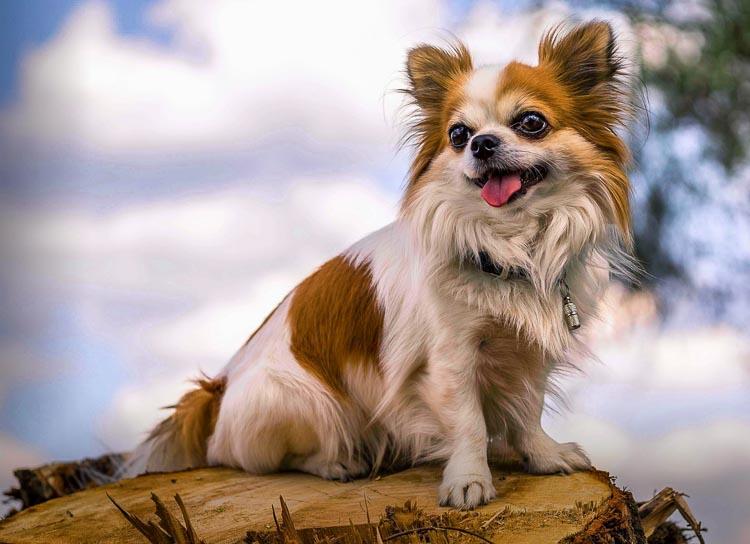 Niektóre psy mogą być nieufne do obcych, inne otwarte, jedne bardziej nerwowe, inne pewne siebie.