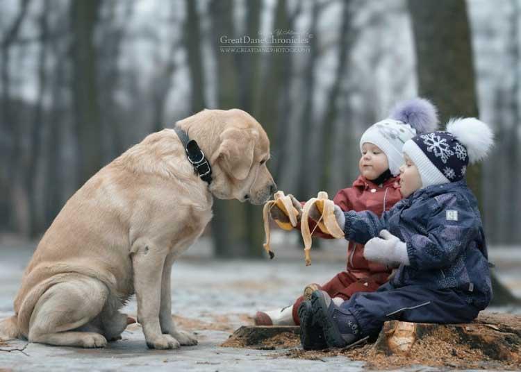 Labradory to inteligentne i łagodne psy