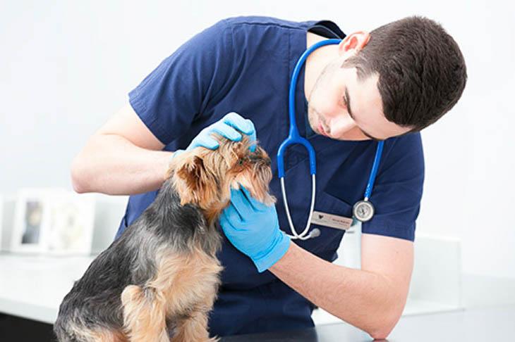 w Animal Care Center Wilanów podchodzimy indywidualnie do każdego czworonożnego pacjenta