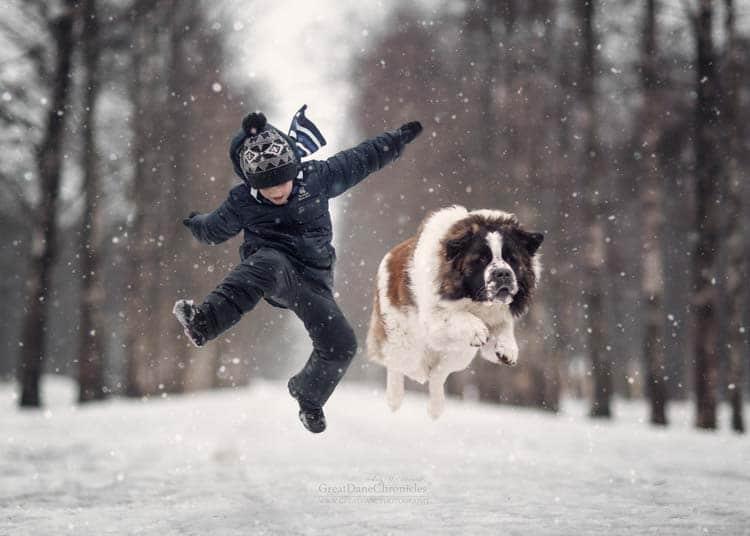 Zdjęcia psa w ruchu