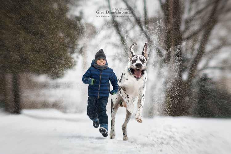 najpiękniejsze zdjęcia psów w plenerze