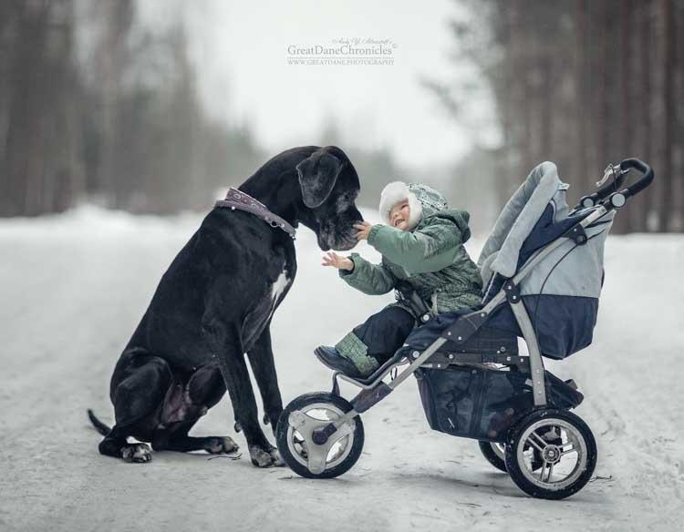 Psy potrafią być niezwykle opiekuńcze wobec małych dzieci