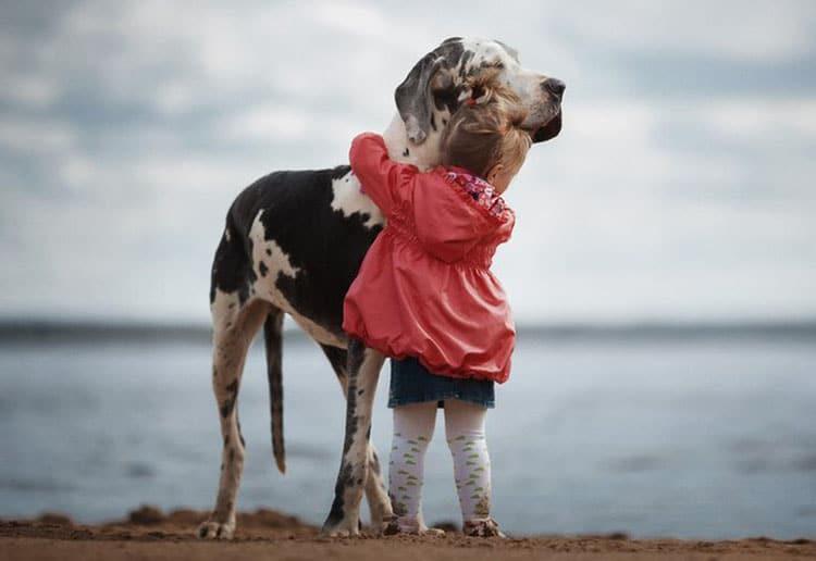 Duże rasy psów w obecności dzieci stają się potulne i opiekuńcze