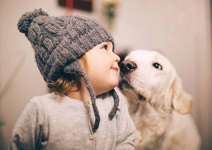 To nie sierść sama w sobie uczula. Uczulający jest naskórek psa i znajdujące się na nim drobnoustroje, resztki moczu, śliny, złuszczające się komórki, różne zanieczyszczenia, które nasz pies przyniósł na sobie ze spaceru