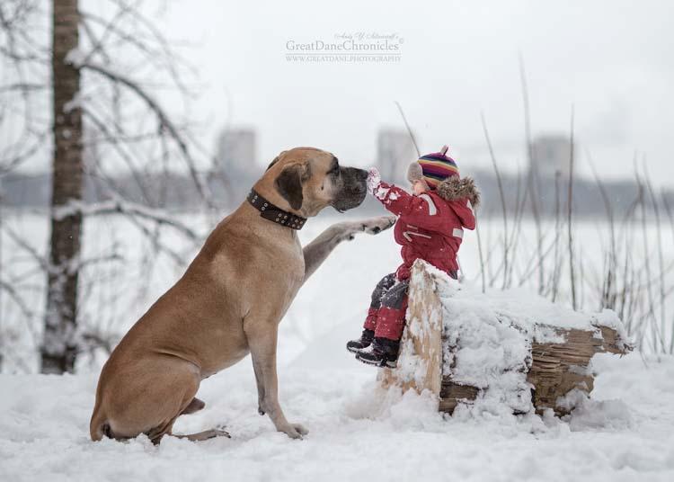 W sesji najchętniej fotografowane są duże psy jak dog niemiecki, bernardyn czy dalmatyńczyk