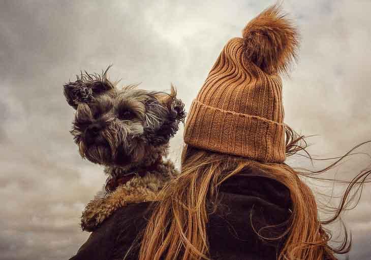 rasy psów z włosem to m.in. maltańczyk, yorkshire terier, jamnik krótkowłosy, rhodesian ridgeback