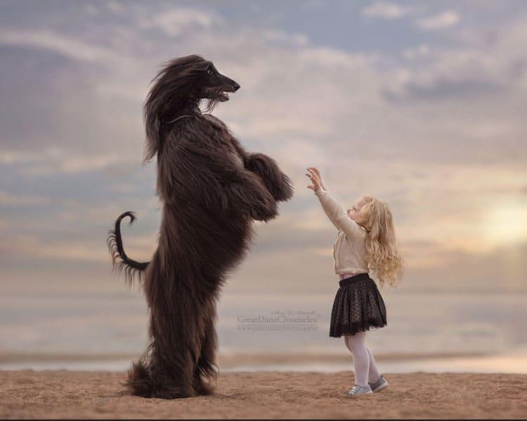 Jednym z głównych założeń serii zdjęć była jak najwierniejsze oddanie relacji łączących małe dzieci i ich wielkie psy.