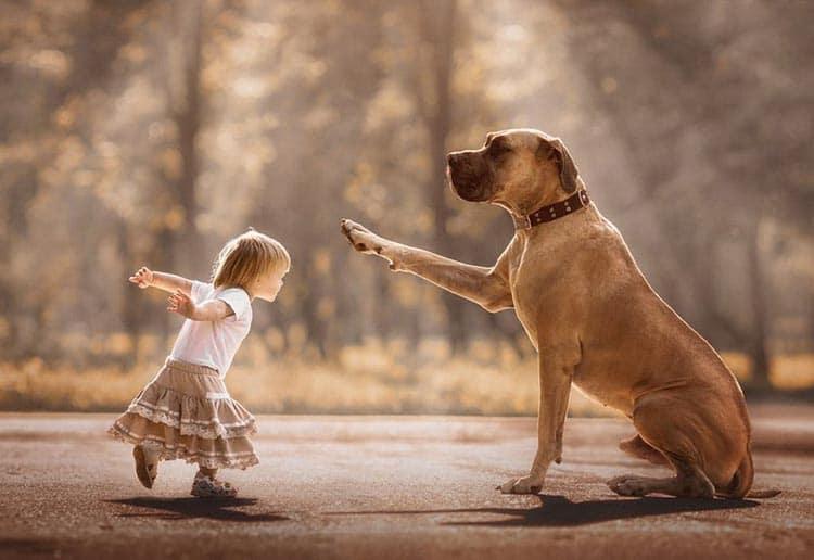 Pies to doskonały towarzysz zabaw