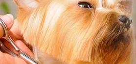 Kiedy Twój pies lub kot musi się dobrze prezentować nikt nie pomoże bardziej niż dobry groomer dla psa i kota