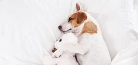 Nie masz z kim zostawić swojego psa? Skorzystaj z bazy hoteli dla psów i kotów